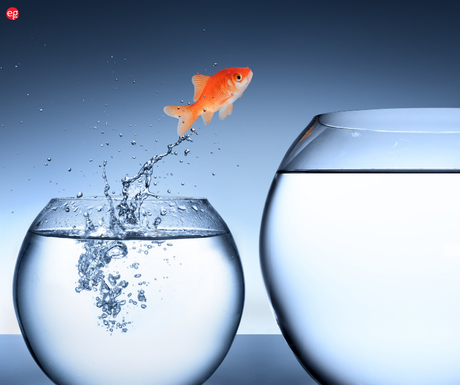 Goldfish jumping out of a small bowl of water into a large bowl of water